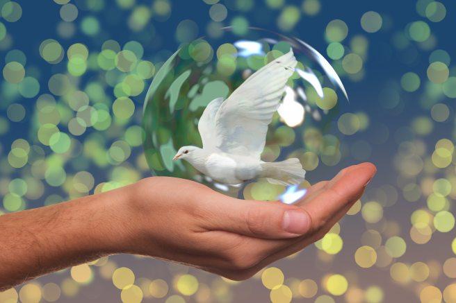 background-dove-fragile-531742
