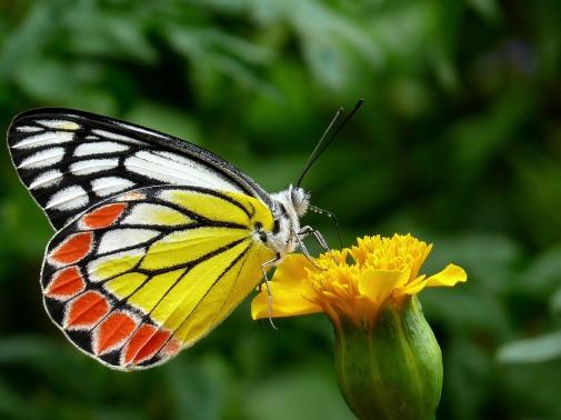 butterfly-85628_1920