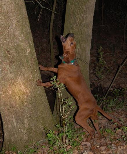 I_tree
