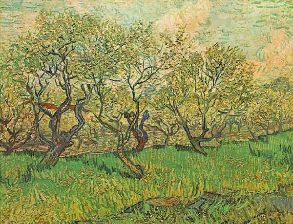 orchards_in_blossom