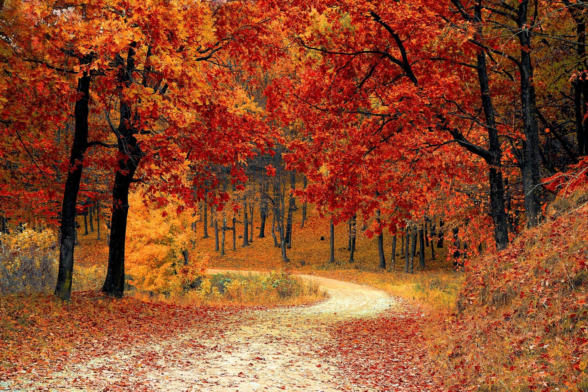 fall-1072821_1920.jpg