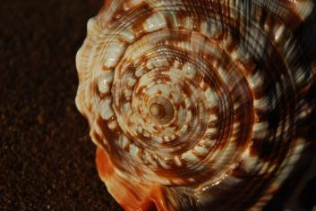 fibonacci-3858696_1920.jpg