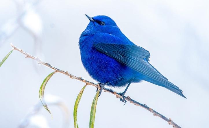 blue-5405703_1920
