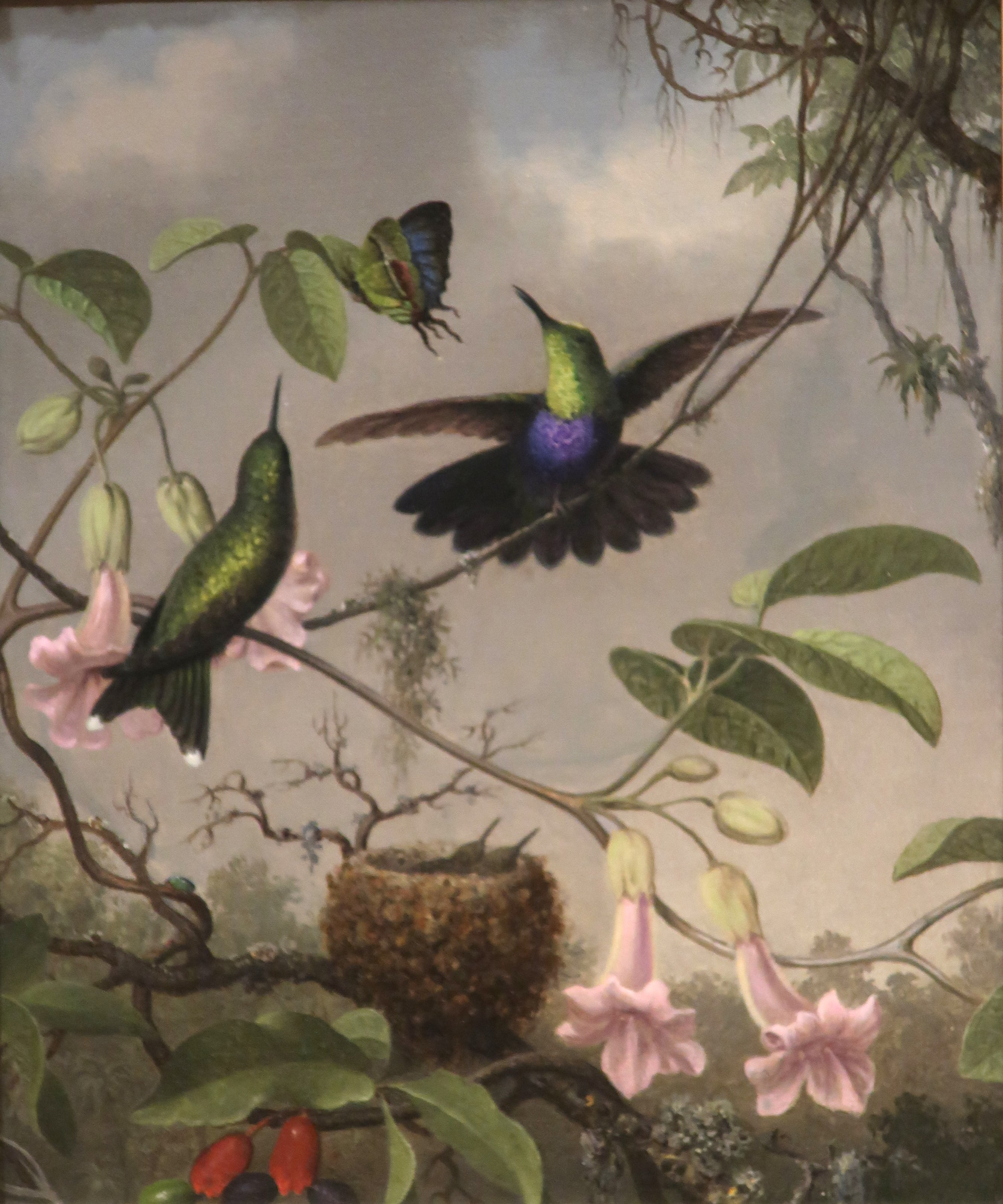 Fork-tailed_Woodnymph_by_Martin_Johnson_Heade